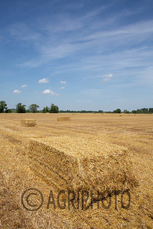 Contractors baling and carting Barley straw in Lincolnshire<br /> ©Tim Scrivener Photographer 07850 303986<br />      ....Covering Agriculture In The UK....