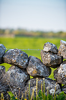 Stone wall along the N17 Road in Gallway
