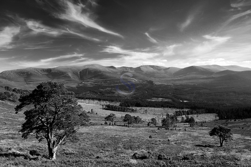 Cairn Gorm and the Northern Corries from Glenmore Forest, Aviemore, Cairngorm National Park, Highland
