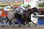 February 07, 2015: #10 Valid (VA) with jockey Paco Lopez on board wins the Fred W Hooper G3 over Grande Shores (FL) by a neck at Gulfstream Park in Hallandale Beach, Florida.   Race Day (KY) takes third. Liz Lamont/ESW/CSM