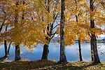 Deutschland, Oberbayern, Landkreis Garmisch-Partenkirchen, im Pfaffenwinkel: Herbststimmung am Staffelsee bei Uffing | Germany, Upper Bavaria, district Garmisch-Partenkirchen: autumn scenery at Staffel Lake near Uffing