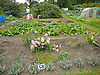 Allotment Plot 58<br /> <br /> Stock Photo by Paddy Bergin