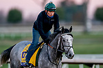 November 4, 2020: Tacitus, trained by trainer William I. Mott, exercises in preparation for the Breeders' Cup Classic at Keeneland Racetrack in Lexington, Kentucky on November 4, 2020. Scott Serio/Eclipse Sportswire/Breeders Cup