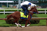 April 20, 2015 Kentucky Derby and Oaks contenders at Churchill Downs. Bold Conquest worked 5F in 1:02.8 with exercise rider Abel Flores at Churchill Downs.  Owner Ackerley Brothers Farm, trainer Steven Asmussen.  By Curlin x One For Jim (Distorted Humor) ©Mary M. Meek/ESW/CSM