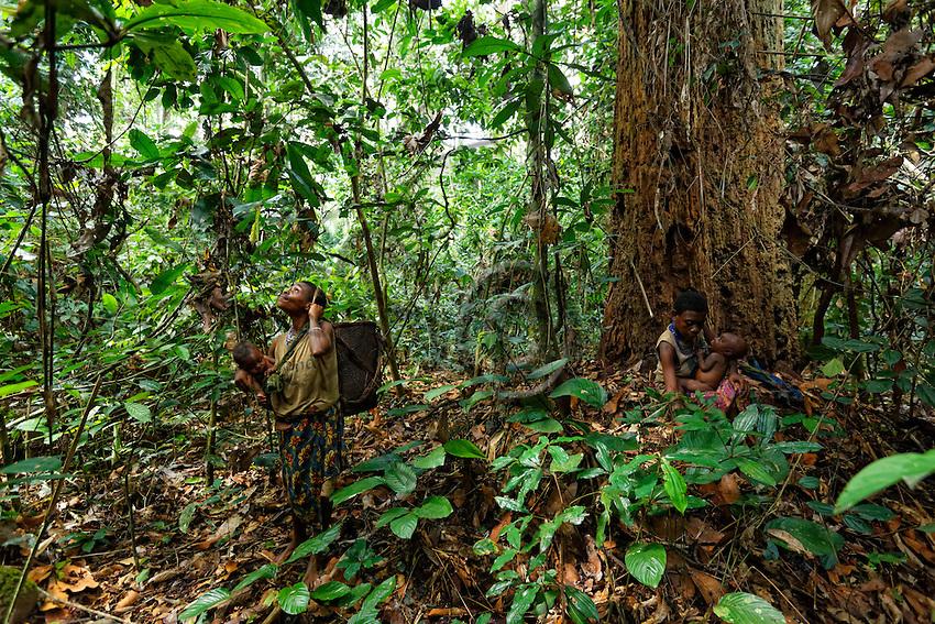 The women go into the forest to gather wild yams for the meals, some palm nuts and also Koko leaves, the leaves of a liana used to prepare a sauce. The Koko leaves are also traded or sold to the Bantu masters who sell them in the market of  Pokola, the neighboring city.///Les femmes partent en foret pour les récoltes d'ignames sauvages pour les repas, de quelques noix de palmes et aussi de feuilles de koko, les feuilles d'une liane utilisées pour la préparation d'une sauce. Les feuilles de Kokos sont aussi vendues ou échangé aux maîtres bantous qui les vendent sur le marché de Pokola la ville voisine.