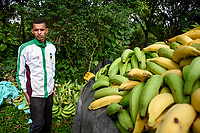 ARMENIA - COLOMBIA, 26-05-2021: Arnold ayuda a cargar la camioneta de plátano Hartón, el pago para un cortador de plátano está entre los COP 50.000 y 70.000. A más de un mes del inicio del Paro Nacional, los campesinos han tenido que reinventar la forma para mantener sus cultivos y criaderos activos para minimizar las pérdidas por los bloqueos que aún se mantienen en las vías. Según cifras del Ministerio de Hacienda, las pérdidas diarias están en un monto de $480.000 millones de pesos colombianos, lo cual sumando la totalidad de los días del Paro Nacional, suman un total de $10,8 billones de pesos colombianos. / Arnold helps to load the banana truck Hartón, the payment for a banana cutter is between COP 50,000 and 70,000. More than a month after the beginning of the National Strike, farmers have had to reinvent the way to keep their crops and farms active in order to minimize losses due to the blockades that still remain on the roads. According to figures from the Ministry of Finance, daily losses are in the amount of $480,000 million Colombian pesos, which adding the total number of days of the National Strike, add up to a total of $10.8 billion Colombian pesos. Photo: VizzorImage / Santiago Castro / Cont