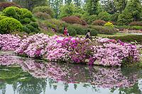 Yangzhou, Jiangsu, China.  Women Making a Photo in the Flower Garden in the Slender West Lake Park, with Azaleas.