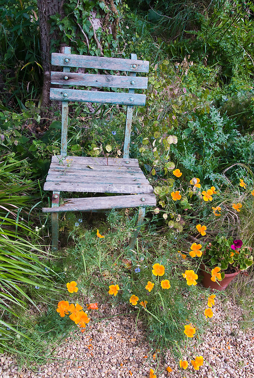 Rustic chair with Icelandic poppies, Lunaria honesty plant, blue flowers of love-in-a-mist Nigella in charming cottage style garden