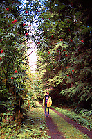 Vancouver Island, BC, British Columbia, Canada - Female Hiker hiking on Trail in Temperate Rainforest (Model Released)