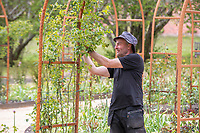 BNPS.co.uk (01202) 558833. <br /> Pic: CorinMesser/BNPS<br /> <br /> Carey Secret Garden. <br /> <br /> Head gardener Paul Scriven in the rose garden.<br /> <br /> The new owners of a historic country estate have discovered an overgrown secret garden that had lain untouched and forgotten for more than 40 years.<br /> Simon Constantine was astounded when he and his children went off exploring the grounds of Carey House near Wareham, Dorset, and found the 'lost' walled garden behind a padlocked gate.<br /> The 3.5 acre plot was built 140 years ago and would have at one stage served both the estate and the wider community with fresh fruit, vegetables and cut flowers back in the day.