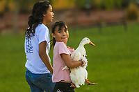 Little girl chases a duck. she plays with wildlife ducks in a wetland (Photo: Luis Gutierrez / NortePhoto.com).<br /> <br /> Niña corretea un pato. juega con patos de vida silvestre   en humedal (Photo: Luis Gutierrez / NortePhoto.com).