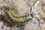 Nudibranchs/Slugs/Worms