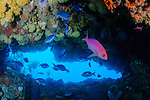 Looking through a crack in the Astrolabe Reef, the warm blue water from summer shines down. Inside the crack in the reef holds a diverse marine community.