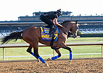 November 5, 2020: Authentic, trained by trainer Bob Baffert, exercises in preparation for the Breeders' Cup Classic at Keeneland Racetrack in Lexington, Kentucky on November 5, 2020. Jessica Morgan/Eclipse Sportswire/Breeders Cup