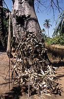 Afrique/Afrique de l'Ouest/Sénégal/Basse-Casamance : Fétiche dans la brousse