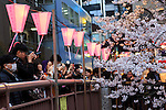 Visitors take pictures of the cherry blossoms in full bloom at Meguro river in Nakamegurgo on April 1, 2016, Tokyo, Japan. On Thursday, the Japan Meteorological Agency announced that Tokyo's cherry trees were in full bloom, three days earlier than usual, but two days later than last year. Meguro River runs for about 7.82km through Setagaya, Meguro and Shinagawa wards in downtown Tokyo, and many visitors come to see the cherry blossom trees along the river banks in spring. (Photo by Rodrigo Reyes Marin/AFLO)