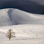 Lone tree and snow covered hills with stormy sky. Hayden Valley, Yellowstone National Park, Wyoming, USA. January