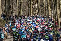 peloton in the forest up La Houppe <br /> <br /> 60th E3 Harelbeke (1.UWT)<br /> 1day race: Harelbeke › Harelbeke - BEL (206km)