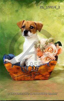 Interlitho, Alberto, ANIMALS, dogs, photos, dog(KL15016/2,#A#) Hunde, perros