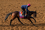November 5, 2020: Mother Earth, trained by trainer Aidan P. O'Brien, exercises in preparation for the Breeders' Cup Juvenile Fillies Turf at Keeneland Racetrack in Lexington, Kentucky on November 5, 2020. John Voorhees/Eclipse Sportswire/Breeders Cup/CSM