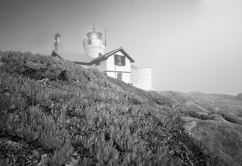Battery Point Lighthouse with ice plants and fog. California