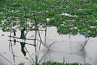 BANGLADESH district Tangail, Elenga, fisherman with fishing net / BANGLADESCH, Distrikt Tangail, Elenga, Fischer mit Senknetz