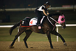DUBAI,UNITED ARAB EMIRATES-MARCH 23: Appolo Kentucky,trained by Kenji Yamauchi,exercises in preparation for the Dubai World Cup at Meydan Racecourse on March 23,2017 in Dubai,United Arab Emirates (Photo by Kaz Ishida/Eclipse Sportswire/Getty Images)