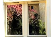On a window with mirror glasses, the reflected image of the glimpse of garden in front of it, with green and blooming trees (Paris, 2007).<br /> <br /> Su una finestra con vetri a specchio, l'immagine riflessa dello scorcio di giardino di fronte, con alberi verdi e fioriti (Parigi, 2020).