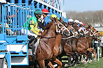 April 25, 2015: Scene. Start of race 7, mile on the turf at Aqueduct Racetrack. Sue Kawczynski/ESW/CSM