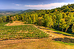 From the deck of Stone Mountain Vineyards, the winery's vineyards are framed by wooded finger hills, opening to the valley beyond.  (HDR image)