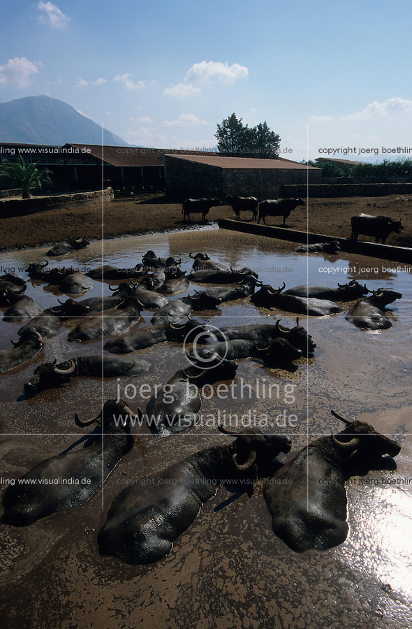 ITALY Campania, organic water buffalo farm and organic Mozzarella cheese processing at Tennuta Vannulo near Paestum / ITALIEN Kalabrien, Wasserbueffel Haltung und Mozzarella Kaeserei auf Biohof Tenuta Vannulo bei Paestum