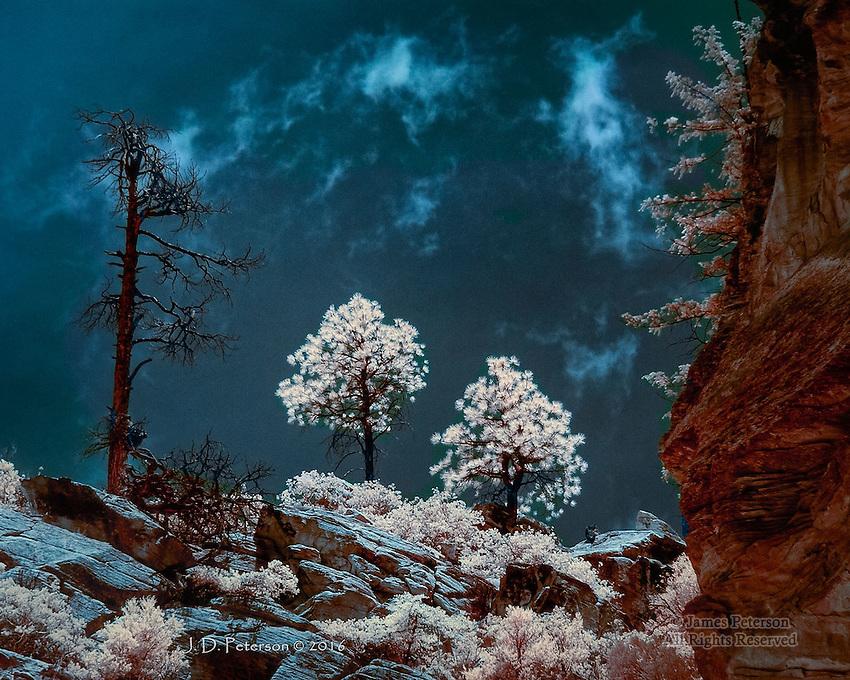 Three Pines, West Fork Rim