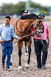 HALLANDALE BEACH, FL - MAR 31:Audible #8 trained by Todd A. Pletcher is lead onto the track toward the walking paddock prior to winning the Xpressbet Florida Derby (G1) at Gulfstream Park on March 31, 2018 in Hallandale Beach, Florida. (Photo by Bob Aaron/Eclipse Sportswire/Getty Images)
