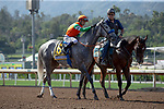 ARCADIA, CA  JUNE 2:  #6 Unique Bella, ridden by Mike Smith, in the post parade of the Beholder Mile (Grade l) on June 2, 2018 at Santa Anita Park in Arcadia, CA. (Photo by Casey Phillips/Eclipse Sportswire/Getty Images)