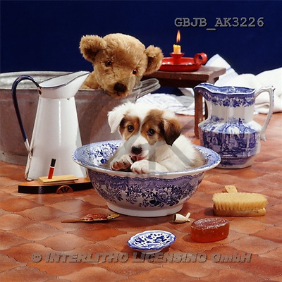 Kim, ANIMALS, dogs, photos(GBJBAK3226,#A#) Hunde, perros
