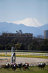 FUCHU,JAPAN-FEBRUARY 19: Horses are running with Mt.Fuji (Fujiyama) for the background at Tokyo Racecourse on February 19,2017 in Fuchu,Tokyo,Japan (Photo by Kaz Ishida/Eclipse Sportswire/Getty Images)