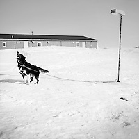 A dog tethered to a lamp post with a chain barks. Established on the east coast of Greenland in 1950, Daneborg is the base for the Sirius Patrol, a Danish navy unit which patrols and enforces Danish sovereignty in the Arctic regions of Northern and Eastern Greenland.