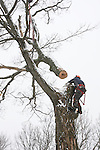 Tree worker strapped to tree trunk.