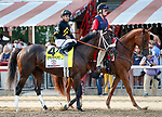Bravazo in the post parade as Catholic Boy (no. 11) wins the Travers Stakes (Grade 1), Aug. 25, 2018 at the Saratoga Race Course, Saratoga Springs, NY.  Ridden by  Javier Castellano, and trained by Jonathan Thomas, Catholic Boy finished 4 lengths in front of Mendelssohn (No. 8).  (Bruce Dudek/Eclipse Sportswire)