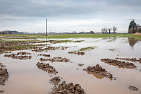 Flooded wheat field following heavy rain - Lincomshire, January