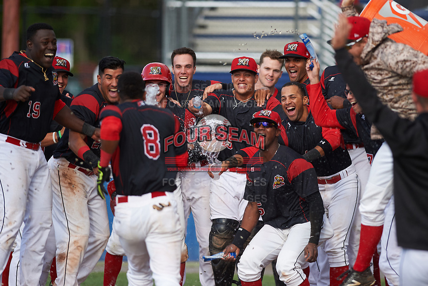 Batavia Muckdogs Marcos Rivera (8) is greeted at home by teammates after hitting a walk off three run home run in the bottom of the ninth inning during a game against the West Virginia Black Bears on June 25, 2017 at Dwyer Stadium in Batavia, New York.  Batavia defeated West Virginia 4-1 in nine innings of a scheduled seven inning game.  Teammates include (L-R) Lazaro Alonso (19), Mike Garzillo (11), Rony Cabrera (26), Mathew Brooks (46), Zachary Daly (38), Bryan De La Rosa (15), Alex Jones (43), Samuel Castro (5), J.C. Millan (4), Nestor Bautista (39).  (Mike Janes/Four Seam Images)