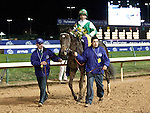 Nov.4, 2011.Royal Delta ridden by Jose Lezcano and trained by William I. Mott heading for the winner's circle after winning the  Breeders' Cup Ladies' Classic at Churchill Downs, Louisville, KY