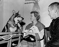 Lotta Dempsey interviews star of Casa Loma's holiday program. German shepherd Thorn is one of four dogs alternating in The Littlest Hobo.