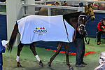 February 27, 2021: #3 Last Samurai in the saddling area before the Southwest Stakes (Grade 3) at Oaklawn Park in Hot Springs, Arkansas. Ted McClenning/Eclipse Sportswire/CSM