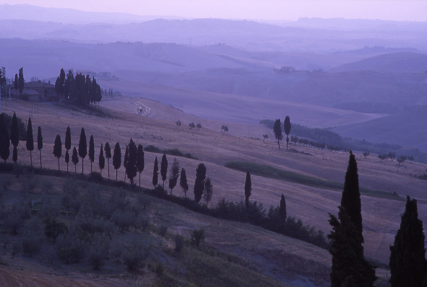 Europe, ITA, Italy, Tuscany, Volterra, Landscape, Typical cypress in the morning light, twilight, Cupressus sempervirens....[ For each utilisation of my images my General Terms and Conditions are mandatory. Usage only against use message and proof. Download of my General Terms and Conditions under http://www.image-box.com or ask for sending. A clearance before usage is necessary...Material is subject to royalties. Each utilisation of my images is subject to a fee in accordance to the present valid MFM-List...Contact   archive@image-box.com   www.image-box.com ]