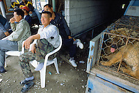 Korea. South Korea. Kimje area. Wonpyong. Dog market for dog meat. Dogs in cage on the  back of a pick-up truck. Dog meat's retaillers take a break before putting a bid on their dog's purchase.  Dog meat is a delicatessen of korean traditionnal cooking. © 2002 Didier Ruef