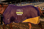 """DEL MAR, CA  AUGUST 18: #5 Accelerate, ridden by Joel Rosario, sports his Breeders Cup Challenge cooler after winning the $1 Million TVG Pacific Classic (Grade l) """"Win and You're in Classic Division"""" on August 18, 2018 at Del Mar Thoroughbred Club in Del Mar, CA.(Photo by Casey Phillips/Eclipse Sportswire/Getty ImagesGetty Images"""