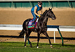 October 29, 2018 : Quarteto de Cordas (BRZ), trained by Ian R. Wilkes, exercises in preparation for the Breeders' Cup Turf at Churchill Downs on October 29, 2018 in Louisville, Kentucky. Evers/ESW/CSM