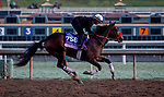 October 30, 2019: Breeders' Cup Juvenile Fillies entrant Lazy Daisy, trained by Doug F. O'Neill, exercises in preparation for the Breeders' Cup World Championships at Santa Anita Park in Arcadia, California on October 30, 2019. Carolyn Simancik/Eclipse Sportswire/Breeders' Cup/CSM