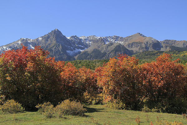 Sneffels Range with scrub oak and Aspen trees, autumn, Colorado.